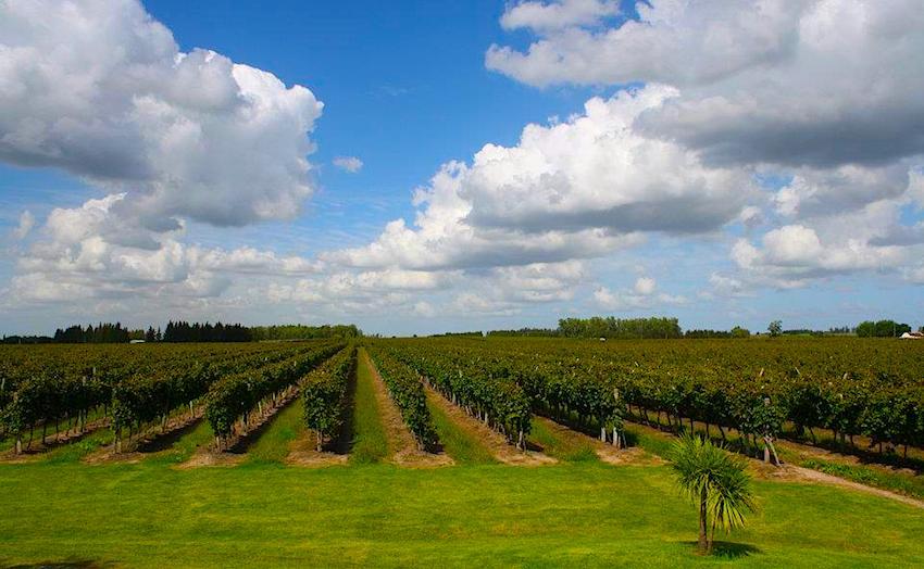 Um guia rápido para sua viagem enoturística ao Uruguai