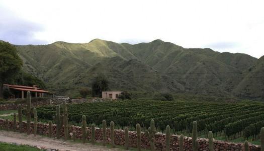 Os vinhos da região de Salta: Bodega San Pedro de Yacochuya #winesofargentina