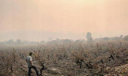 Ajude a reconstruir os sonhos de pequenos vinhateiros no Chile